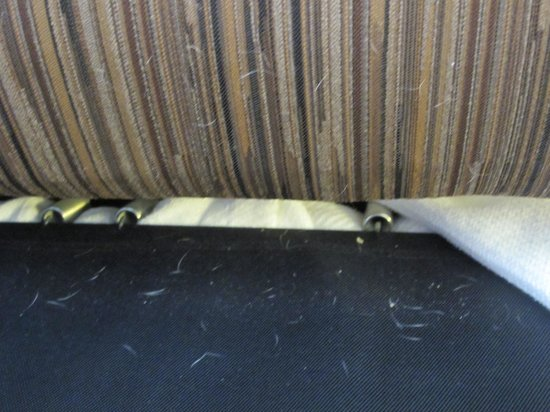 Holiday Inn Rapid City - Rushmore Plaza: Some of the dog hair on the sofa