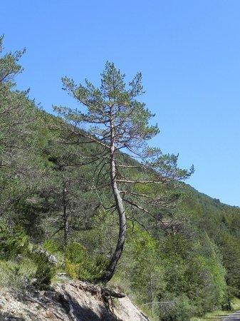Caseron Baruca: VallePineta