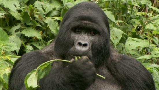 Gorillas and Wildlife Safaris - Day Tours