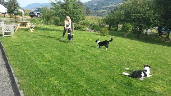 Torran B & B: Garden... with the three nice dogs!