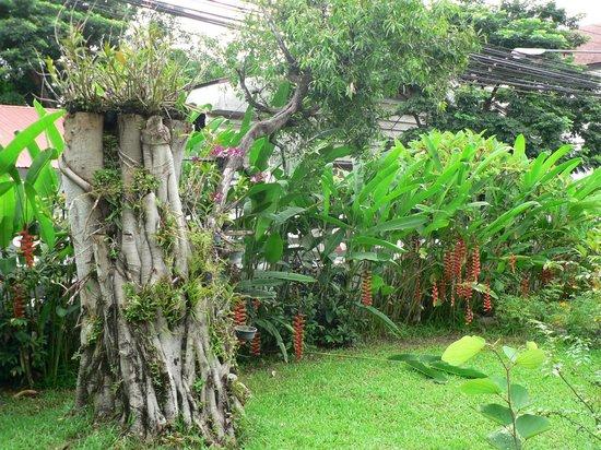 Baan Rub Aroon: El jardín