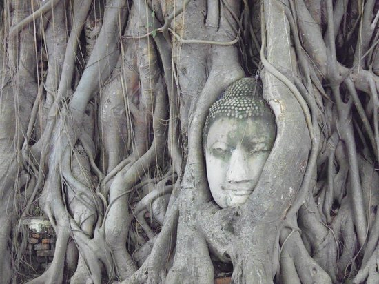 Ayutthaya, Tailândia: The Buddha head in the tree