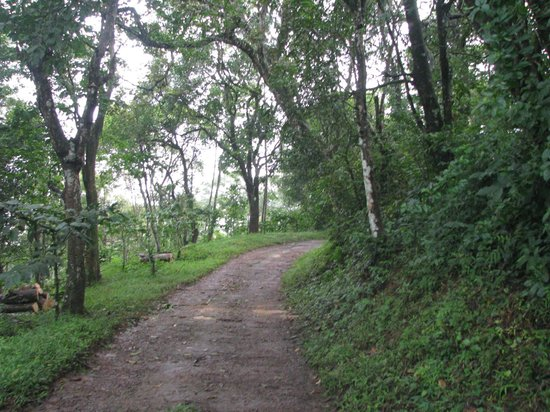 Verdure Wayanad: the way
