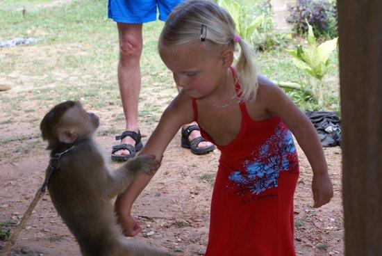 Lanta Monkey School: Monkey School Koh Lanta