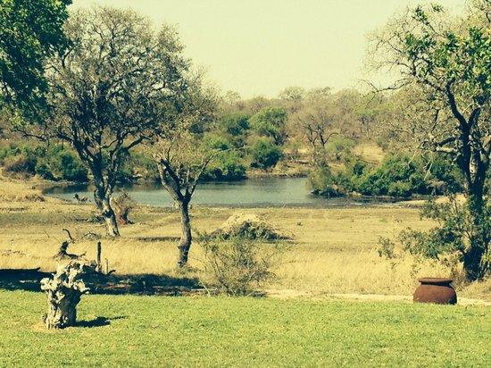 Singita Castleton : Chilling with the Zebras and Elephants