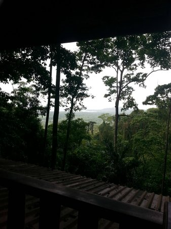 Samasati Retreat & Rainforest Sanctuary : jungle!