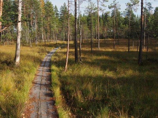 Ruovesi, Finlandiya: Mire landscape.