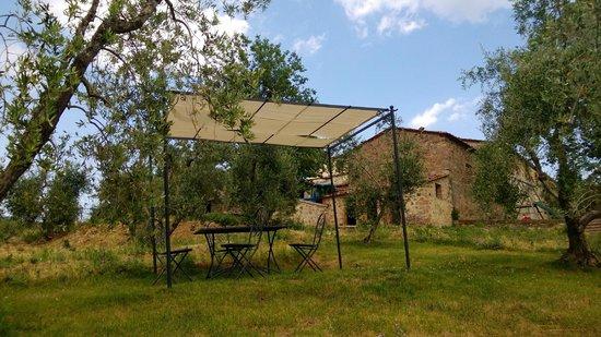 La Casaccia Guelfi: Next to the swiming pool