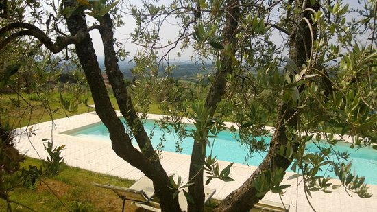 San Gusme, Italië: Pool and olive tree