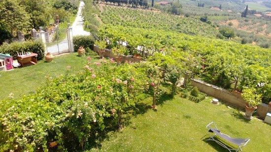 La Casaccia Guelfi: Garden