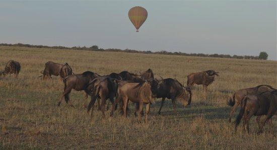Basecamp Masai Mara: Hot air ballooning over the Mara