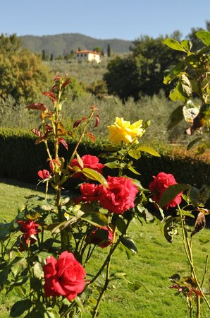 Casa Portagioia - Tuscany Bed and Breakfast: Flowers everywhere.