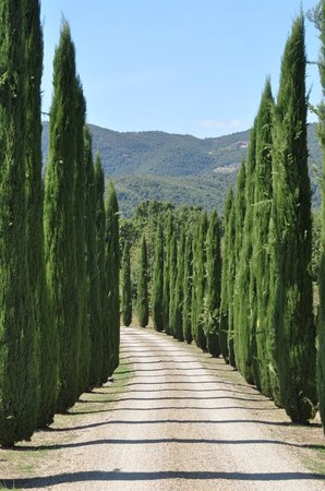 Casa Portagioia: The cypress line driveway leading to Cas Portagioia.