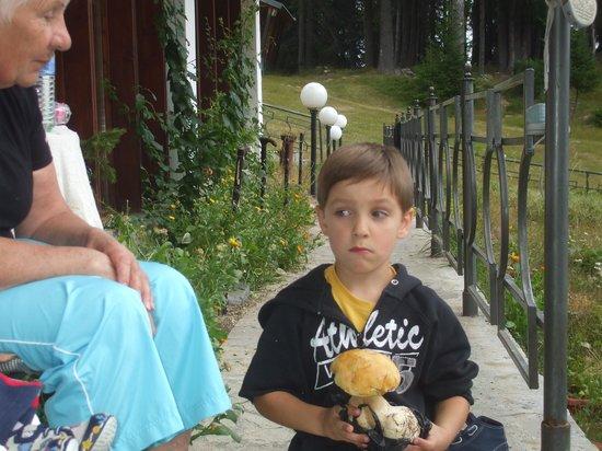 Villa Elitza: нашли грибы