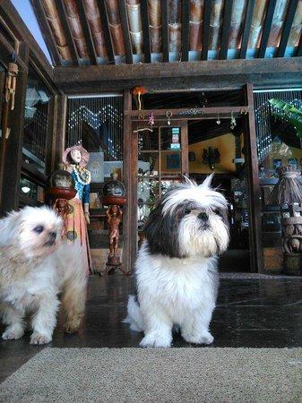 Aquabarra Boutique Hotel & Spa: Cãezinhos super calmos e tranquilos.