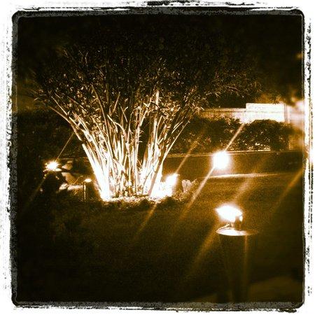 B&B L'Oleandro: L'oleandro di notte