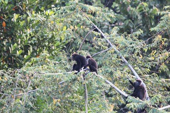 Black Beauty Guesthouse: живность, снято на территории гестхауса, обезьяны приходят в 5-6 утра большой семьей
