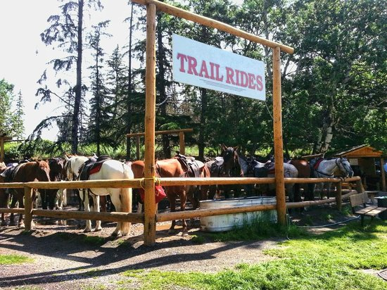 Buffaloberry Bed and Breakfast: The horse riding stables at Banff Springs