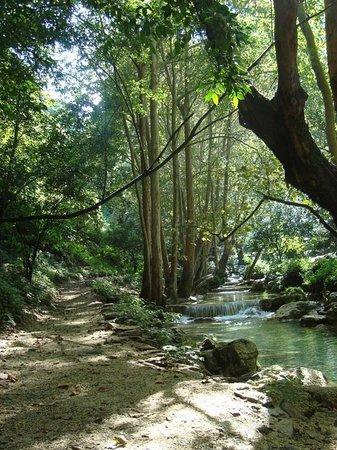 Aventurate - Private Tour: Rio rodeado grandes arboles