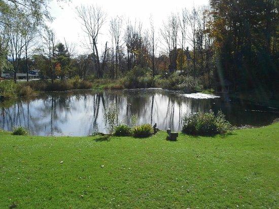 Seth Warner Inn: Relax by the pond