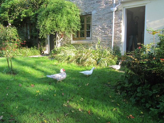 Watermill Cottages: Breakfast time at Quack Cottage