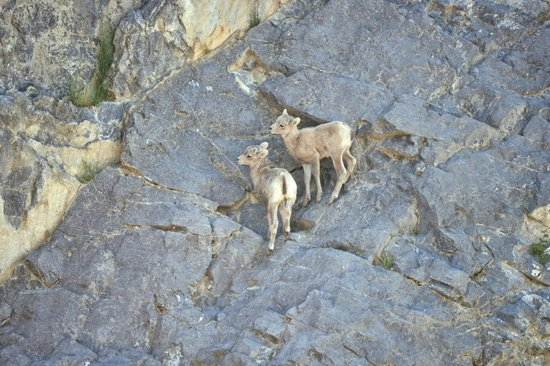 Wyndswept Bed and Breakfast: Baby goats