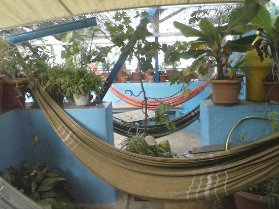 Casa Caracol: Terrace