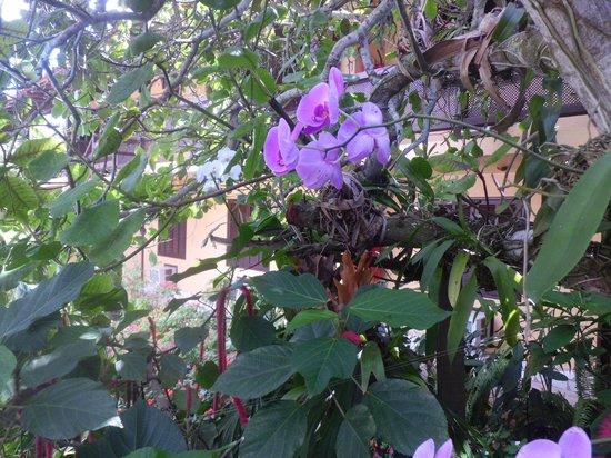 Pousada Calmaria : Garden