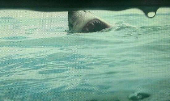 Marine Dynamics: Video stills from our trip