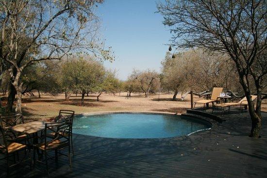 Itaga Luxury Private Game Lodge: Pool Area