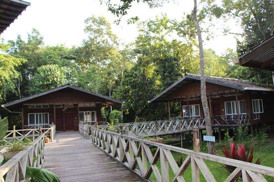 Borneo Nature Lodge : Chalets