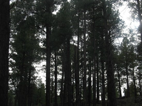 Little America Hotel Flagstaff: Surrounding woods
