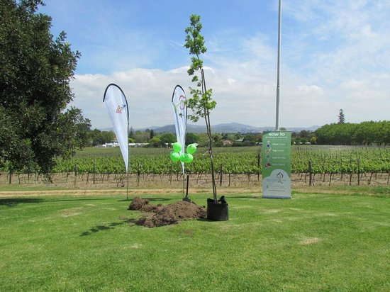 Lanzerac Hotel & Spa: Turkish Oak Tree planted