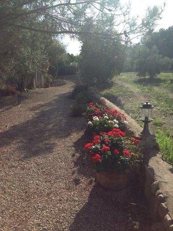 Finca Son Jorbo: Garden path