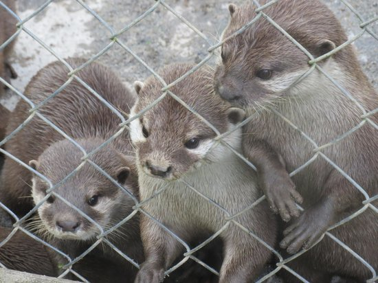 Tamar Otter and Wildlife Centre: Cute otters