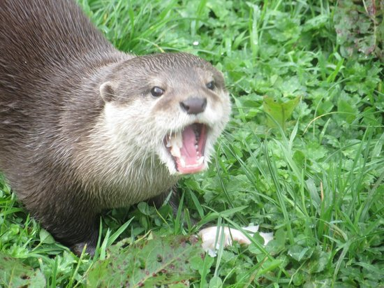 Tamar Otter and Wildlife Centre : Yummy!