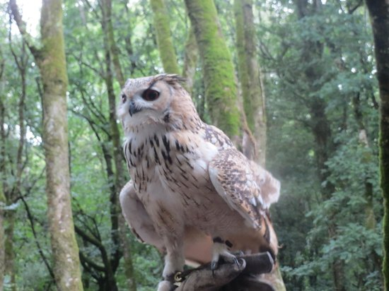 Tamar Otter and Wildlife Centre: One of the beautiful owls