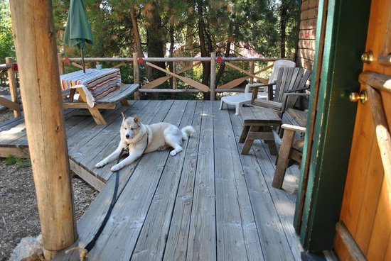 Arrowhead Pine Rose Cabins: Our dog Timber enjoying front deck at Fisherman's Hideaway