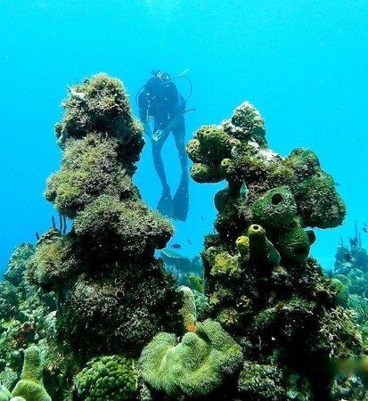 El Tour Caribe -  Tours : Scuba Diving in Catalina Island Dominican Republic