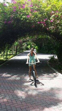 Sun Island Resort: .......