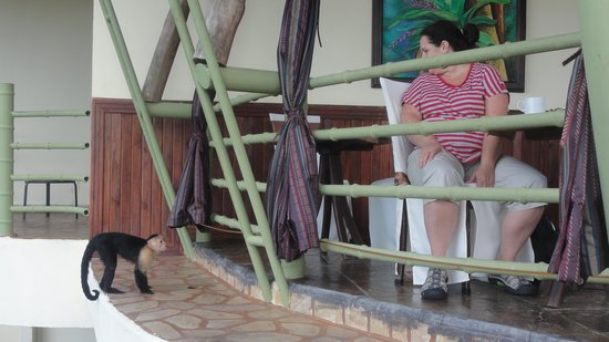 Issimo Suites Boutique Hotel and Spa: Capuchin monkey visits at breakfast