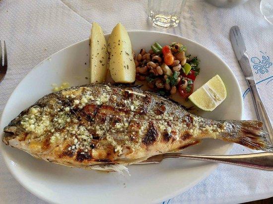 Gioma Taverna: Yum Yum Yum  Very Fresh