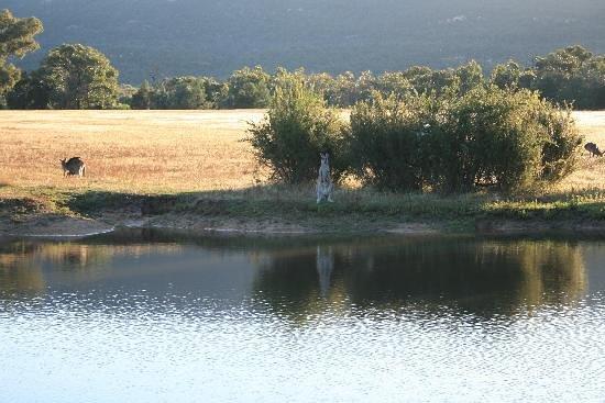 بلايز روك ريتريت: View the wild life in their natural setting.