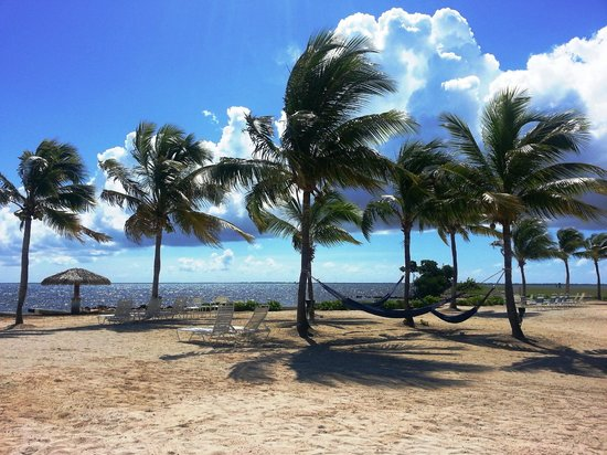 The Blue Iguana Grill: Dining with a view