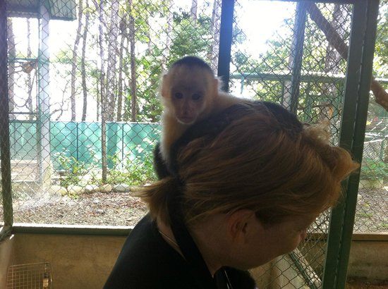Osa Mountain Rainforest Villas & Adventures: at the animal sanctuary