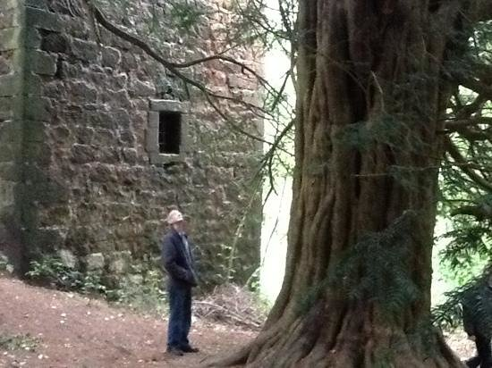 The Original Rosslyn Hotel : an ancient yew tree below the castle,  and a wonderful new friend..