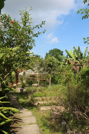 Swasti Eco Cottages: Garden just down the path