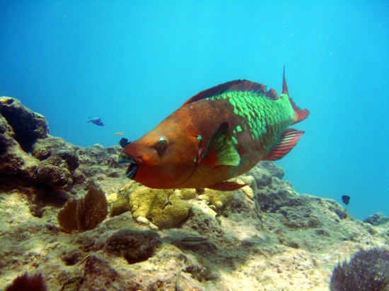 Snuba Key West: One of the fish we encountered during our dive!!