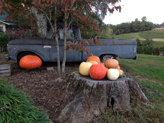 Crane Creek Vineyards: beautiful, fall harvest at the winery!
