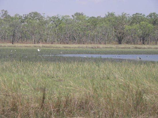 Pudakul Aboriginal Cultural Tours: the lake